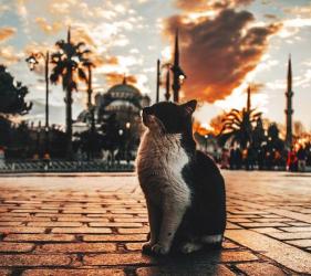 Истанбул - полъх от ориента от Варна