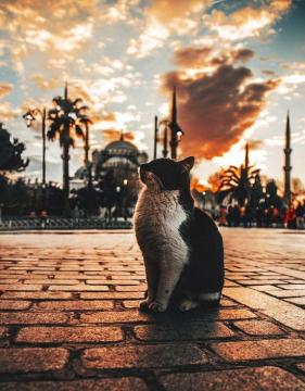 Истанбул - полъх от ориента от Варна есенна програма